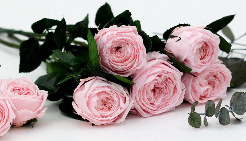 Verdissimo Fleur stabilisée Fleurs et compositions Fleurs et Senteurs   