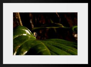 PHOTOBAY - l'oeil de la forêt - Photographie