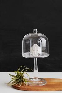 SIDAI DESIGNS -  - Cloche En Verre Décorative