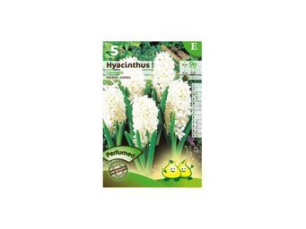 CK ESPACES VERTS - bulbe jacinthe carnegie blanc x5 - Semence
