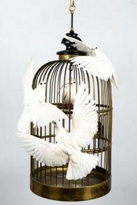 Artixe - les colombres - Cage À Oiseaux