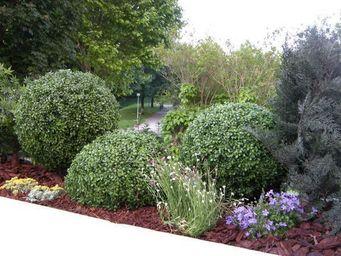 Decors Nature -  - Jardin Paysager