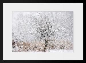 PHOTOBAY - blanche neige - Photographie