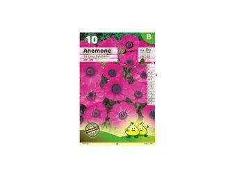 LES DOIGTS VERTS - bulbe anémone de caen rose x10 - Bulbes De Fleurs