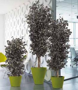 Element Vegetal - eucalyptus - Plante Stabilisée