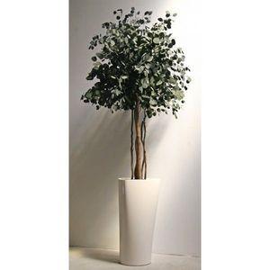Infinie Nature -  - Plante Stabilis�e