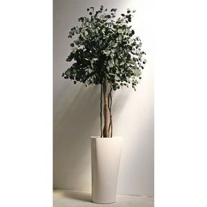 Infinie Nature -  - Plante Stabilisée