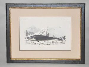 Demeure et Jardin - gravure baleine - Gravure