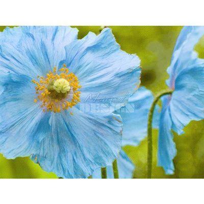 Magel'design - Tableau contemporain-Magel'design-Blue Poppies 120x80 cm , 3D effet relief