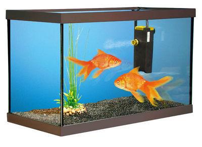 ZOLUX - Aquarium-ZOLUX-Aquarium kit poissons rouges 40x20x15cm