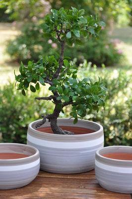 Les Poteries D'albi - Bac à arbre-Les Poteries D'albi-L'Escale