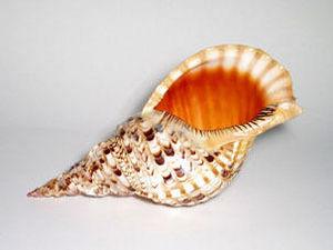 AN ATOLL -  - Shellfish