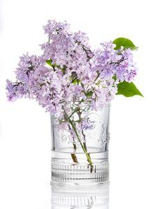 La Rochere - versailles - Flower Vase