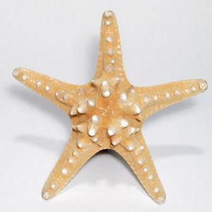 AN ATOLL - e d m jungle m.m 15/20 cm - Starfish