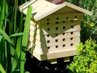 Wildlife world - solitary bee hive - Insect