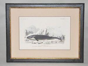 Demeure et Jardin - gravure baleine - Engraving