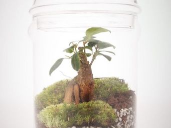 GREEN FACTORY - flat xl - Terrarium Garden Under Glass