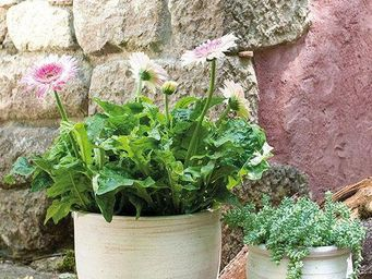 DEROMA France - roots - Flower Container