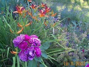 Libre Jardin -   - Landscaped Garden