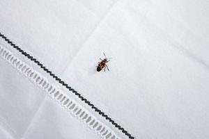 LA MAISON BAHIRA - venise - Pillowcase