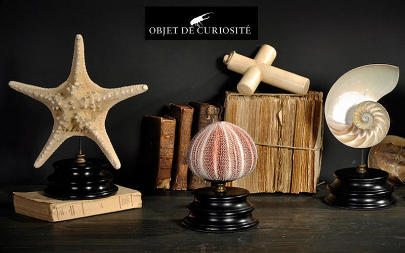 Objet de Curiosite Muscheln Marinegegenstände Dekorative Gegenstände  |