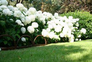 Garten Rabatten