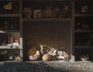 DE MUSEUM WINKEL.COM -  - Fossilie