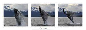 Nouvelles Images - affiche saut de baleine à bosse alaska - Plakat