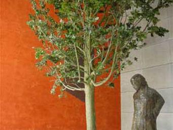 Hortus Verde - quercus - Stabilisierter Baum