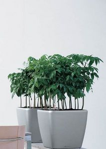 DESIGNER PLANTERS - lechuza quadro - Garten Blumentopf