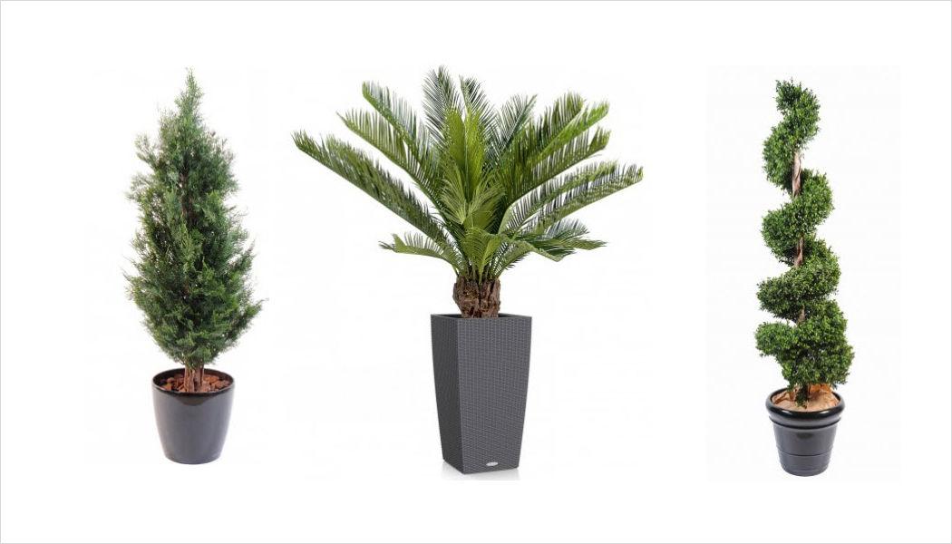 FLORE EVENTS Planta artificial Árboles & plantas Flores y Fragancias  |
