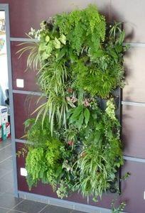 Flowall -  - Planta Natural De Interior