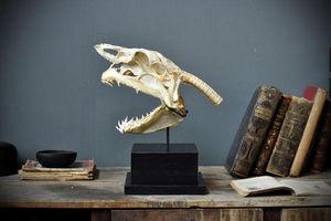 Objet de Curiosite - crâne complet de requin mako l - Animal Disecado