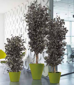 Element Vegetal - eucalyptus - Plantas Preservadas