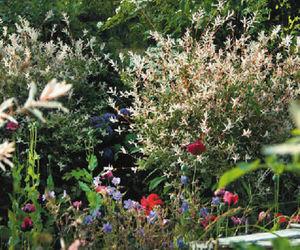 Horticulture Et Jardin -  - Jardín Paisajístico