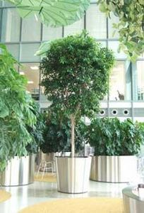 Indoor Garden Design - barclays - Planta Natural De Interior