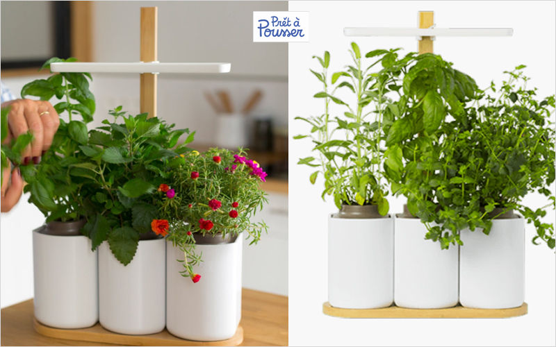 PRÊT À POUSSER Giardino per interni collegato Varie domotica Domotica  |