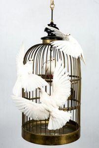 Artixe - les colombres - Gabbia Per Uccelli