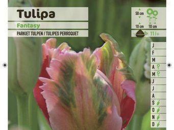 LES DOIGTS VERTS - bulbe tulipe perroquet fantasy x10 - Bulbi
