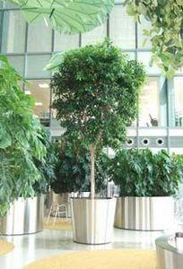 Indoor Garden Design - barclays - Pianta Naturale Per Interni